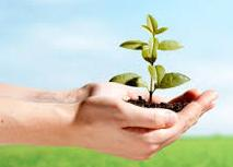 IKCO Preserves 1396 Plant Species at Risk